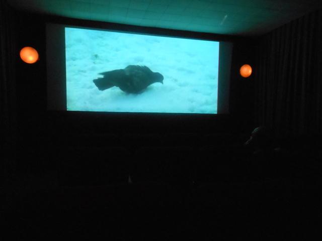 """Kingsway """"Screening Room"""""""