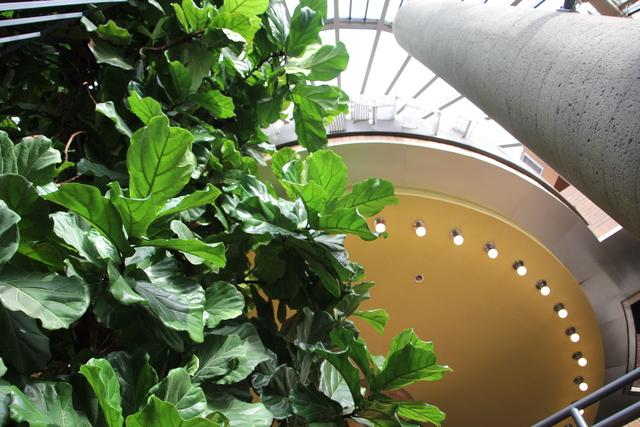 Capitol 6 Tree of Life