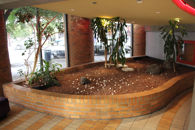 Corner popcorn garden in lower lobby