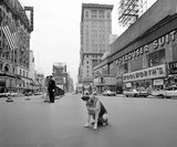 A dog sits in the middle of an empty Times Square during 10-minute civil defense test air raid alert in New York, on April 28, 1961. Photo & copy courtesy of Nec Spe Nec Metu.