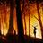 hampton_woods